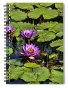 Purple Water Lilies - Nymphaea Capensis  Spiral Notebook