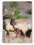 Put Up Your Dukes Spiral Notebook
