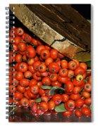 Pyracantha Berries Spiral Notebook