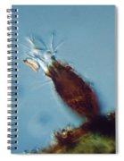 Pyxicola Sp Spiral Notebook