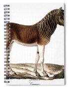 Quagga (equus Quagga) Spiral Notebook