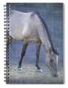 Quarter Horse In Blue Spiral Notebook