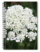 Queen Annes Lace Spiral Notebook