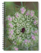 Queen Anne's Lace Flower Partly Open With Dew Spiral Notebook