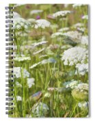Queen Anne's Lace In All Its Glory Spiral Notebook
