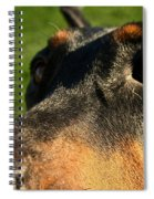 Questions Spiral Notebook