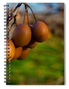 Quince In The Early Moning Sun Spiral Notebook