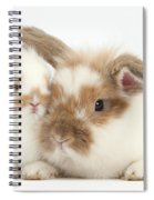 Rabbit And Baby Bunny Spiral Notebook