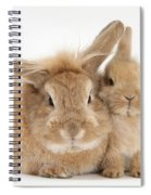 Rabbit And Baby Rabbit Spiral Notebook