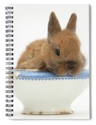Rabbit In A China Bowl Spiral Notebook