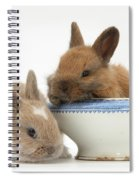 Rabbits And China Bowl Spiral Notebook