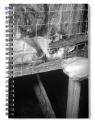 Rabid Fox, 1958 Spiral Notebook