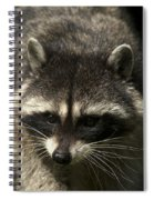 Raccoon 2 Spiral Notebook