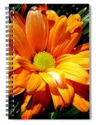 Radiating Spiral Notebook