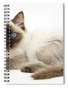 Ragdoll Kitten Spiral Notebook