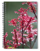 Rain Drops On Firespike  Spiral Notebook