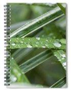 Rain Drops On Grasses Spiral Notebook