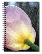 Rain Falling On A Tulip Spiral Notebook