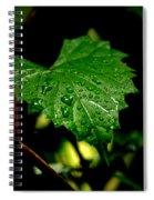 Rain On Ivy Spiral Notebook