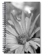 Raindrops On Daisy Spiral Notebook