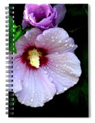 Raindrops On Roses Of Sharon Spiral Notebook