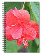 Rainy Day Hibiscus Spiral Notebook