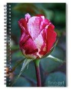 Raspberry Swirl Rose Spiral Notebook