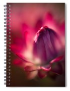 Rasta Cornsilk Spiral Notebook