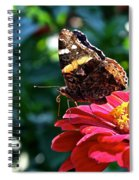 Red Admiral Probocis Spiral Notebook