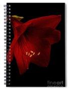 Red Amaryllis - 2 Spiral Notebook