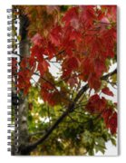 Red And Green Prior X-mas Spiral Notebook