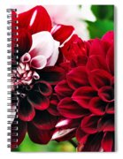 Red And White Variegated Dahlia Spiral Notebook