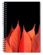 Red Autumn Leaves On Edge Spiral Notebook