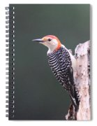 Red-bellied Woodpecker - Looking For Food Spiral Notebook
