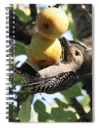 Red-bellied Woodpecker - Yummy Pears Spiral Notebook