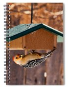 Red-bellied Woodpecker At Lunch Spiral Notebook