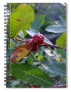 Red Berry  Spiral Notebook
