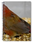 Red Billed Fire Finch Spiral Notebook