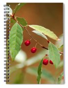 Red Bird Berries Of Fall Spiral Notebook