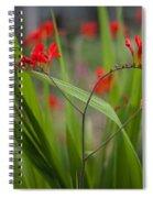 Red Blade Symmetry Spiral Notebook