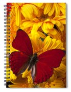 Red Butterfly On Yellow Gerbera Daisies  Spiral Notebook