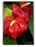 Red Calla Lily Spiral Notebook