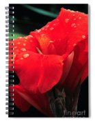Red Canna With Raindrops Spiral Notebook