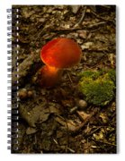 Red Caped Mushroom 4 Spiral Notebook