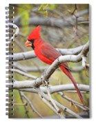 Red Cardinal  Spiral Notebook