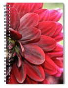 Red Carpet Dahlia Spiral Notebook