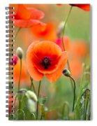 Red Corn Poppy Flowers 05 Spiral Notebook