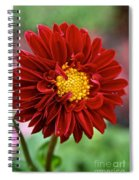 Red Dahlia Unfurled Spiral Notebook