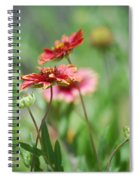 Red Daisies  Spiral Notebook