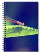 Red Damselfly Spiral Notebook